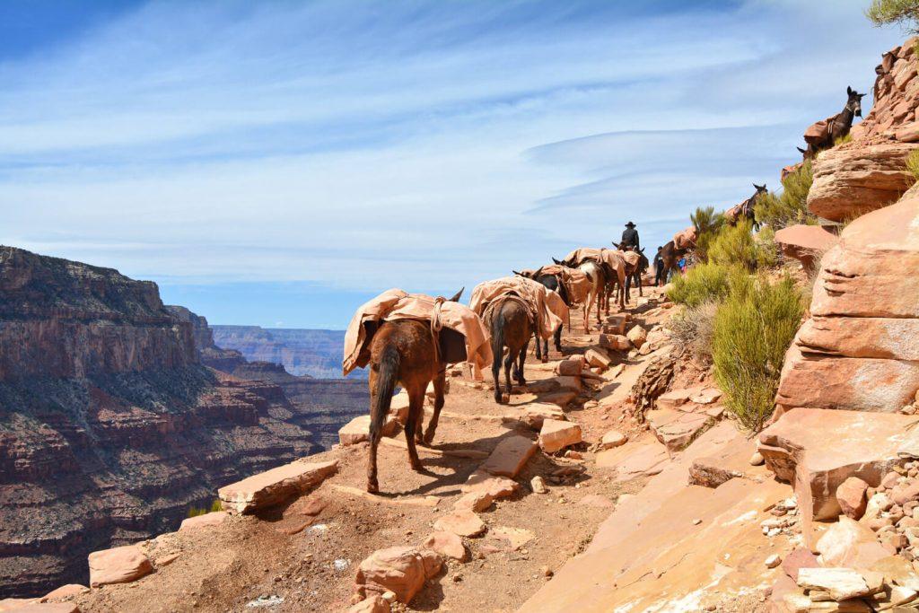Grand Canyon Mule Train